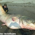 280 pounds' huge catfish, it was caught in Italy.